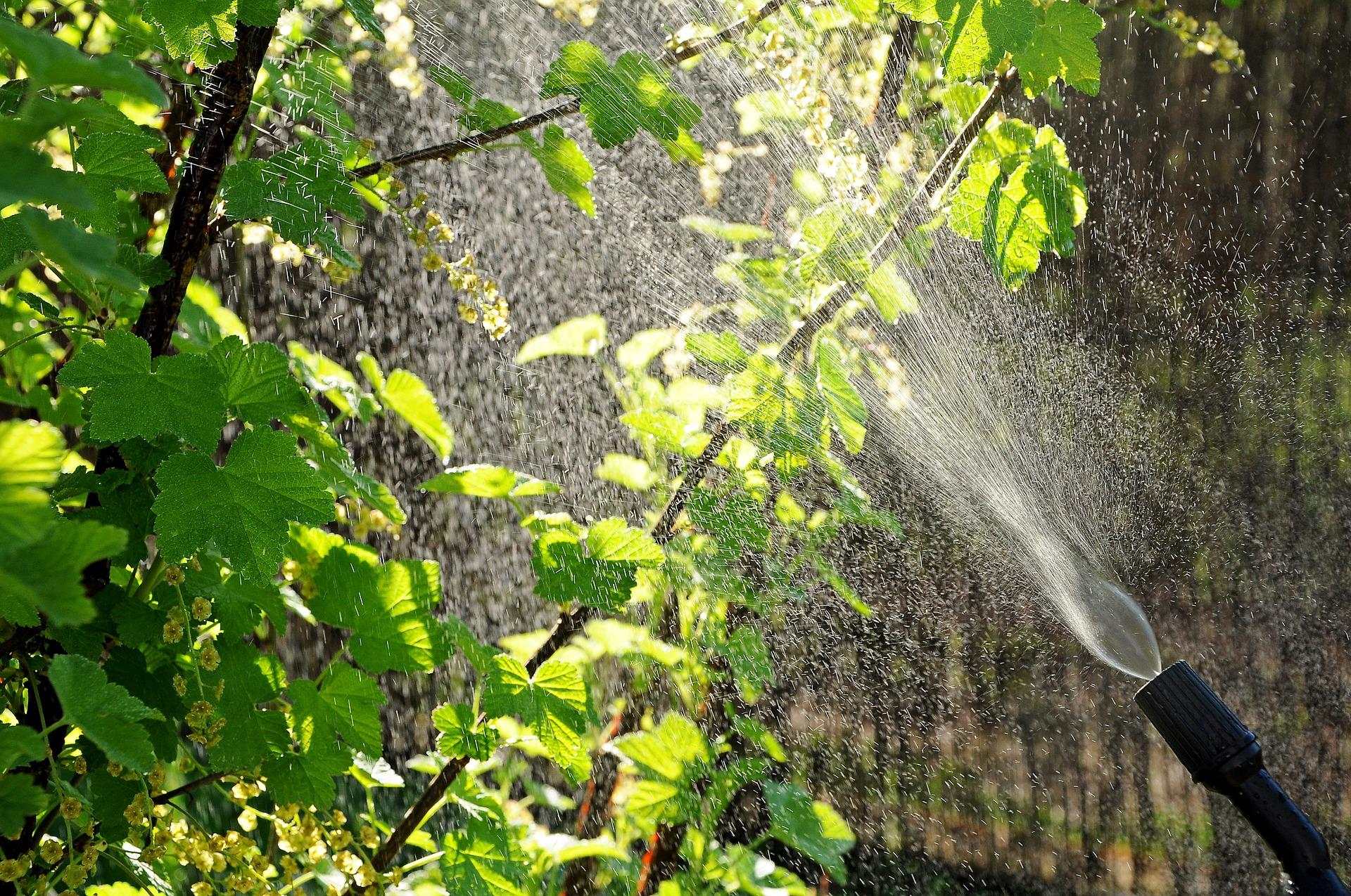 Comment Arroser Efficacement Son Jardin
