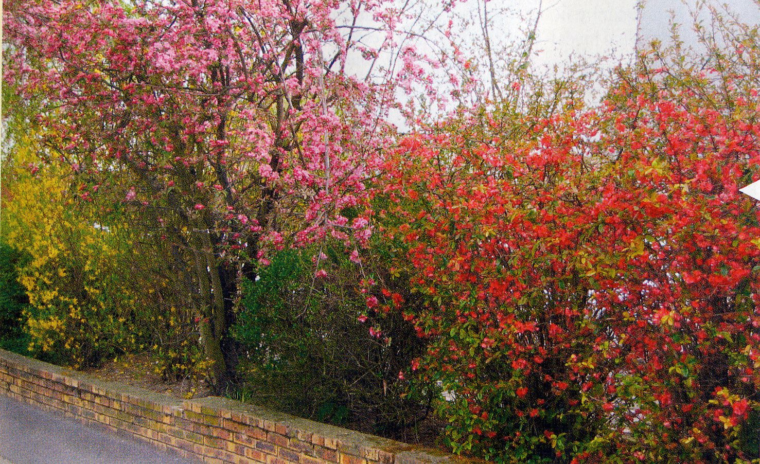 Quel arbre planter dans son jardin crit res pour le for Bruler dans son jardin